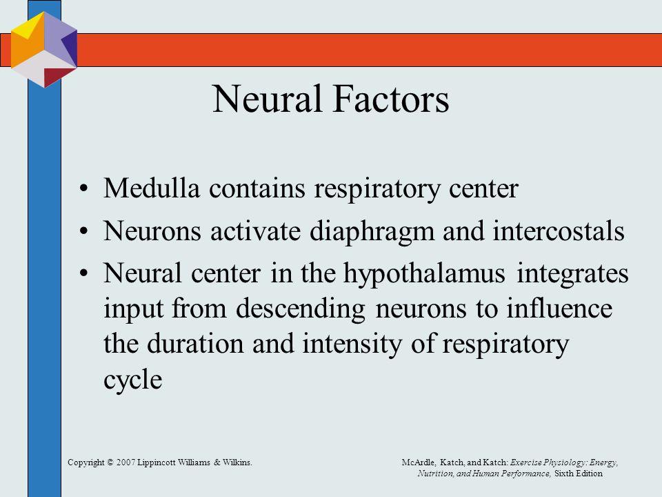 Neural Factors Medulla contains respiratory center