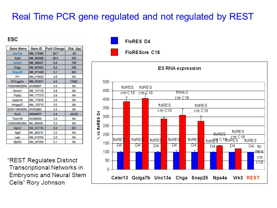 Real Time PCR gene regulated and not regulated by REST