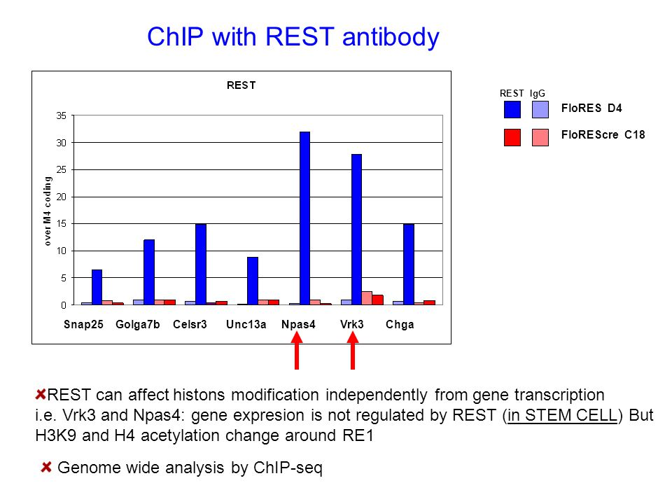 ChIP with REST antibody