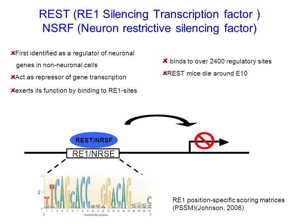 REST (RE1 Silencing Transcription factor ) NSRF (Neuron restrictive silencing factor)