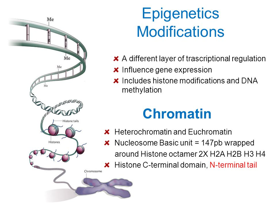 Epigenetics Modifications