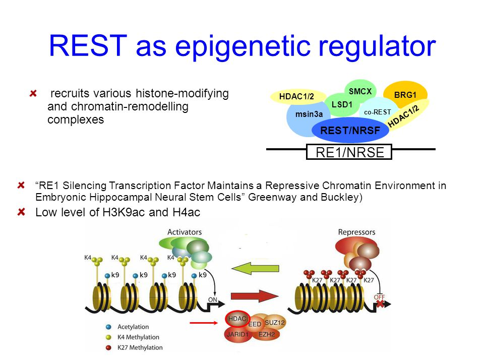 REST as epigenetic regulator