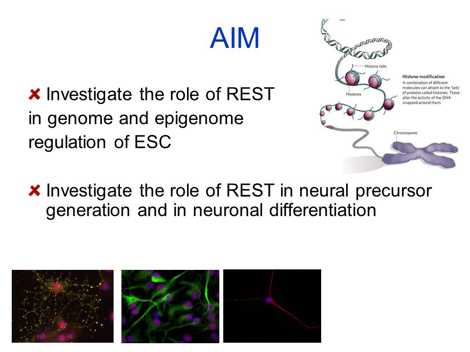 AIM Investigate the role of REST in genome and epigenome