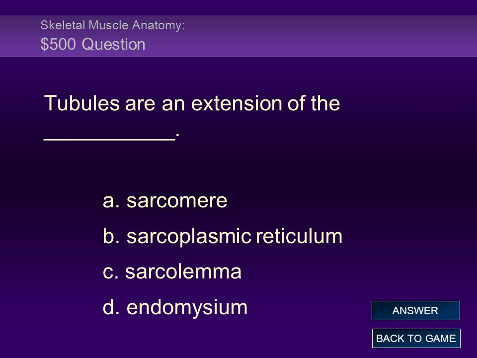 Skeletal Muscle Anatomy: $500 Question
