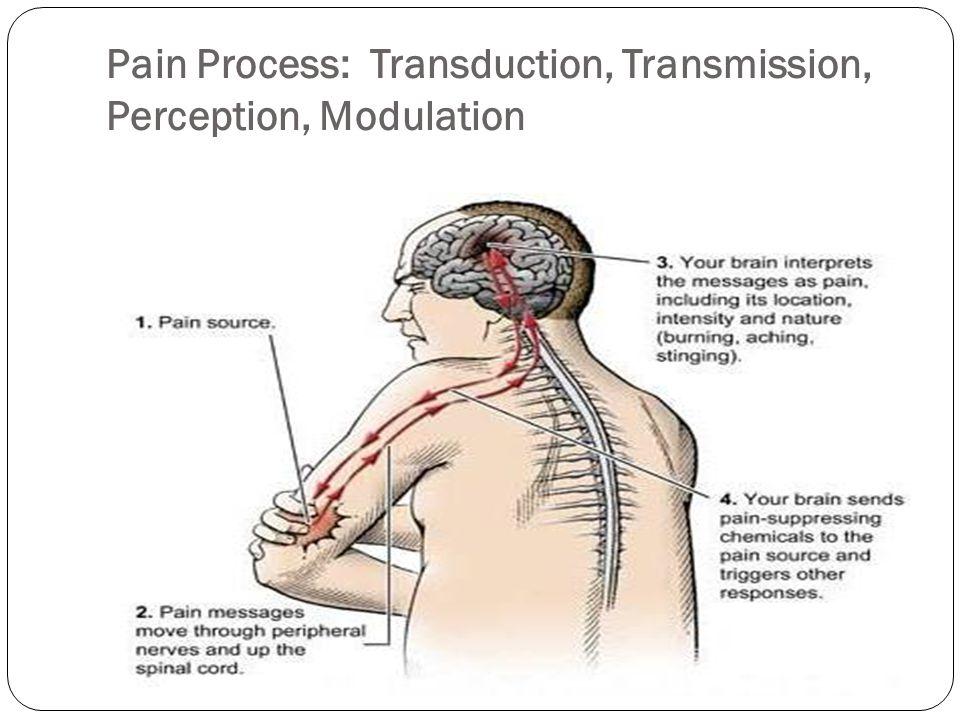 Pain Process: Transduction, Transmission, Perception, Modulation