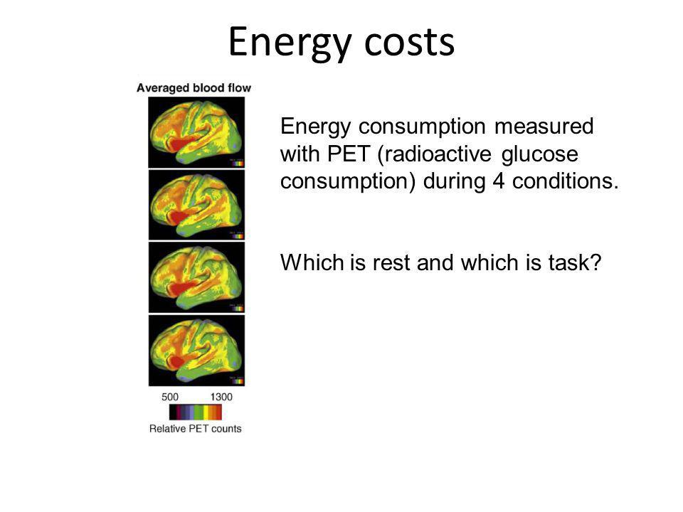 Energy costs Energy consumption measured with PET (radioactive glucose consumption) during 4 conditions.