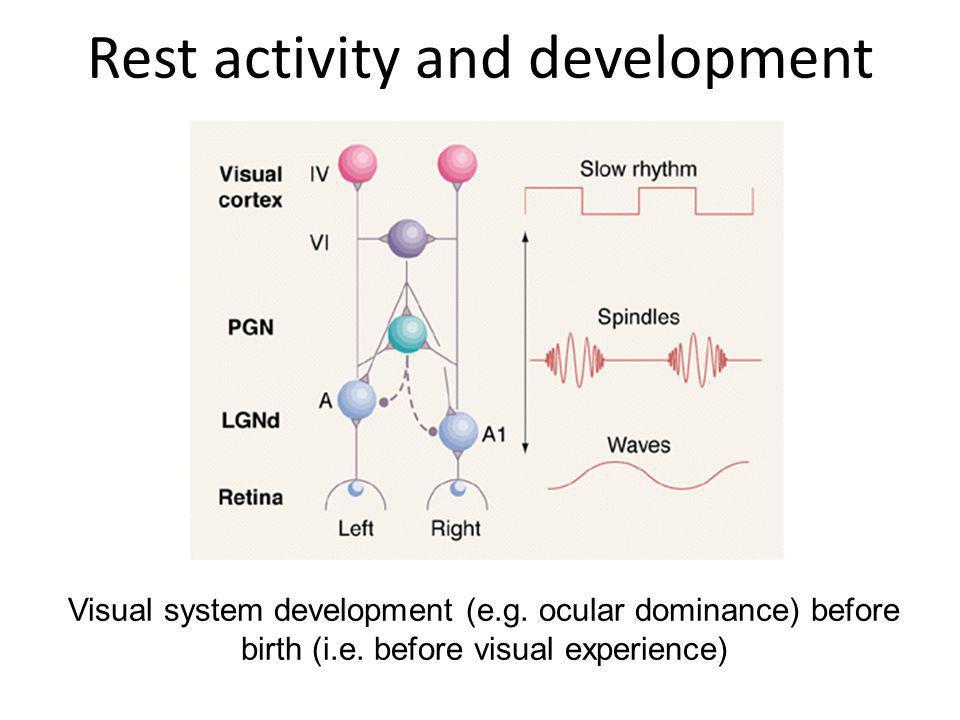 Rest activity and development