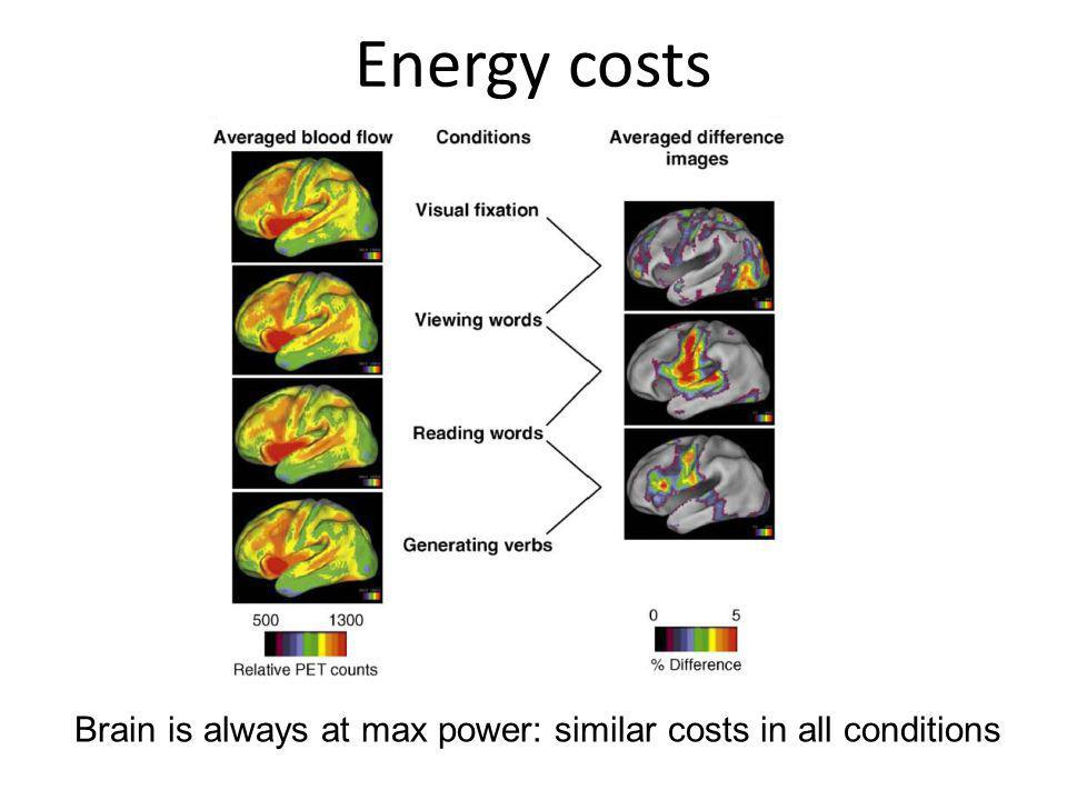Brain is always at max power: similar costs in all conditions