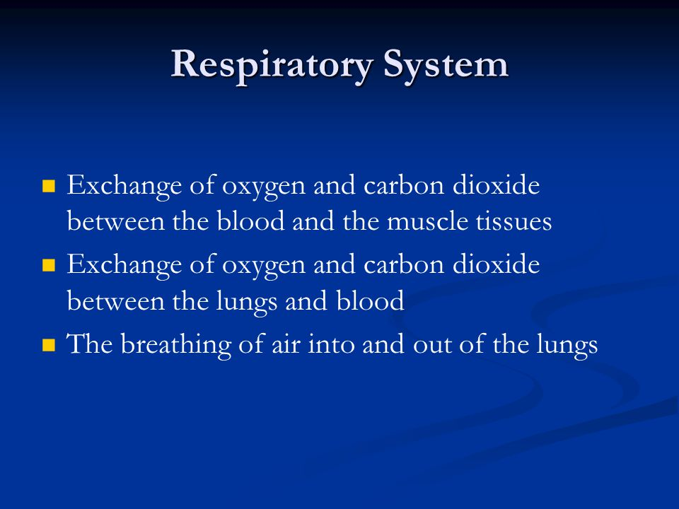 Respiratory System Exchange of oxygen and carbon dioxide between the blood and the muscle tissues.