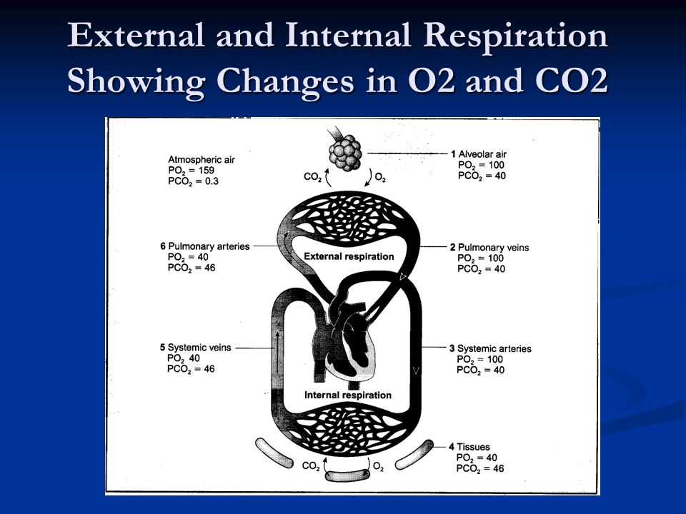 External and Internal Respiration Showing Changes in O2 and CO2
