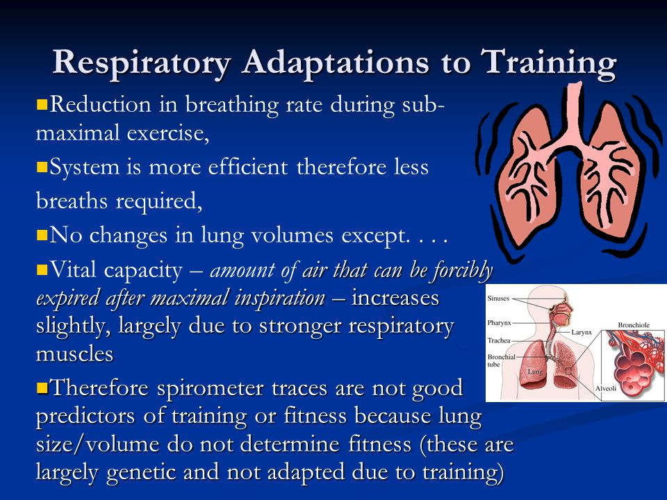 Respiratory Adaptations to Training
