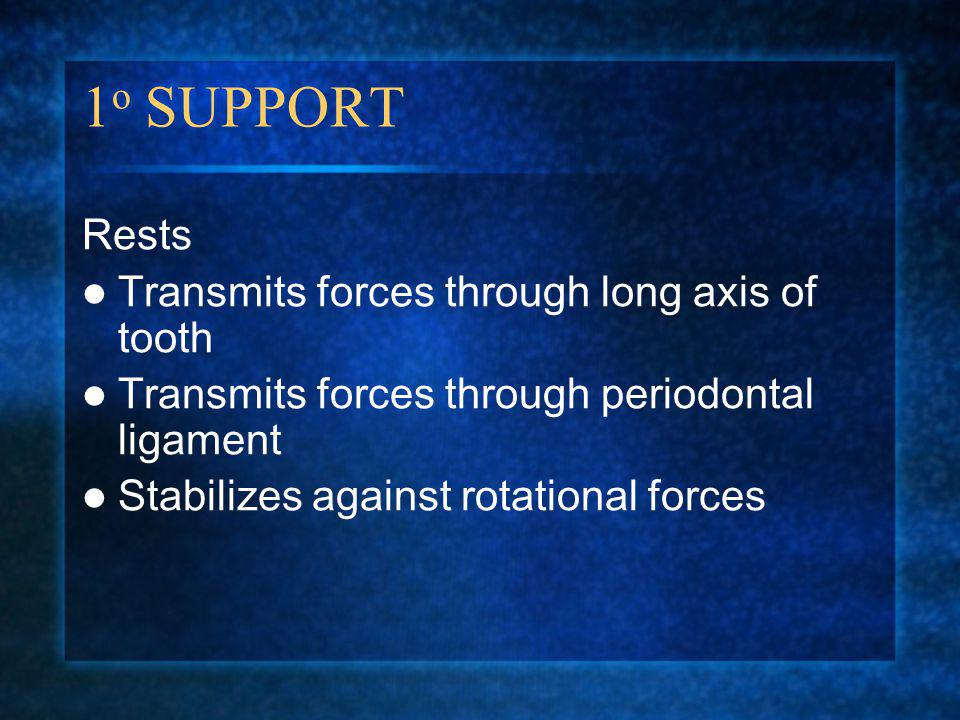 1o SUPPORT Rests Transmits forces through long axis of tooth