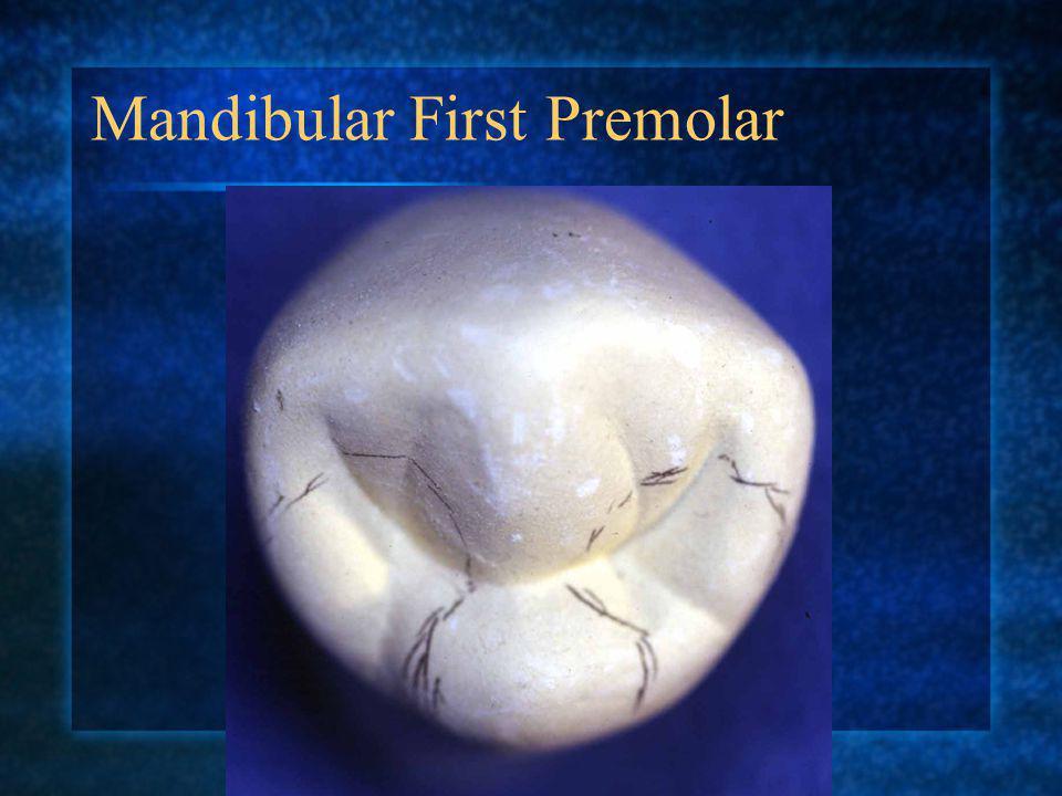 Mandibular First Premolar