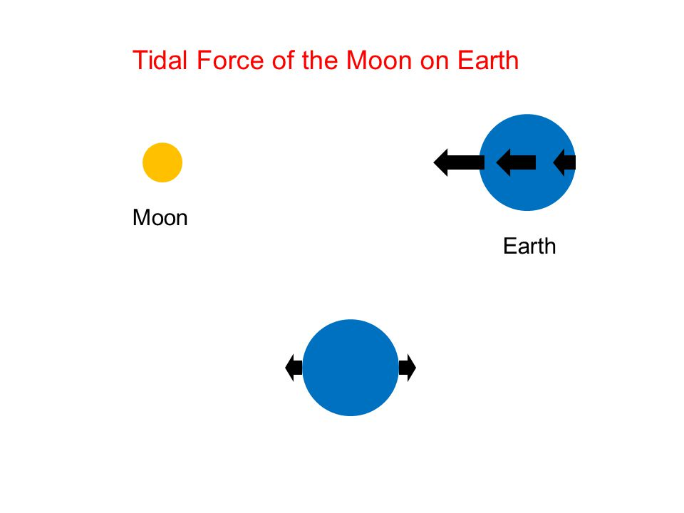 Tidal Force of the Moon on Earth