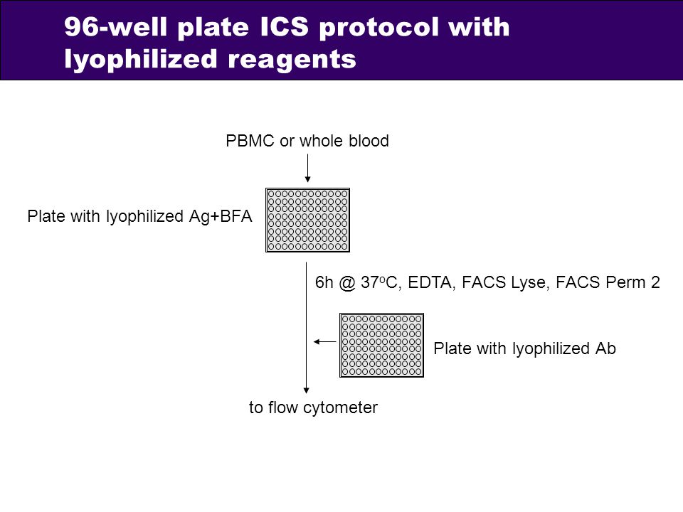96-well plate ICS protocol with lyophilized reagents
