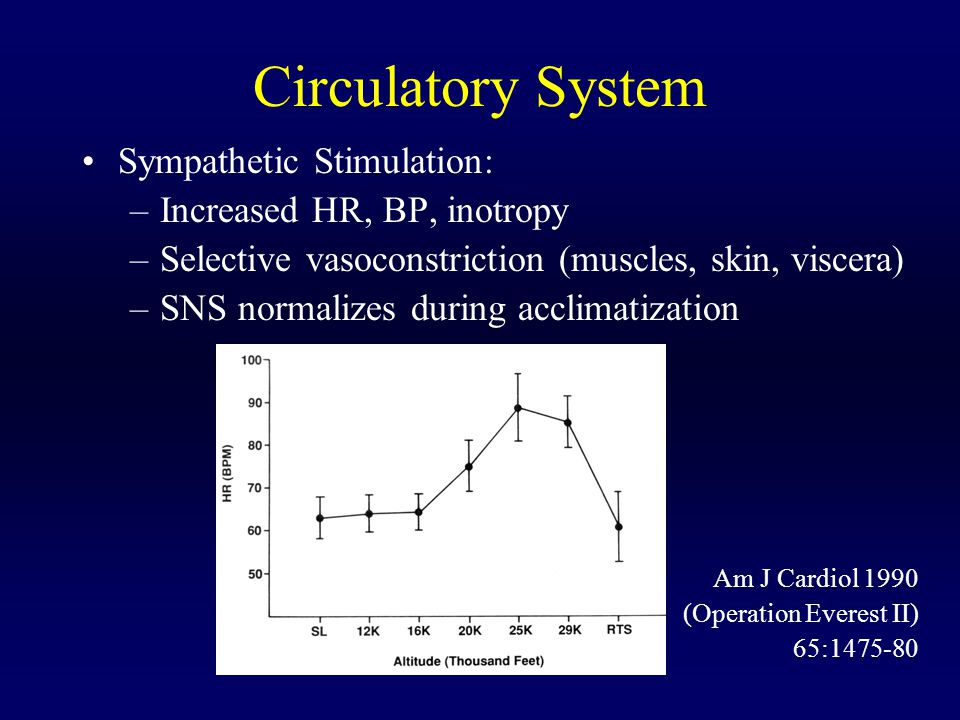 Circulatory System Sympathetic Stimulation: Increased HR, BP, inotropy