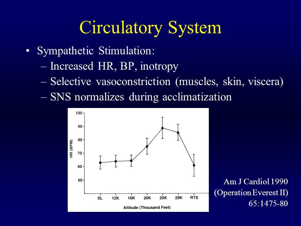 Circulatory System Sympathetic Stimulation: Increased HR, BP, inotropy