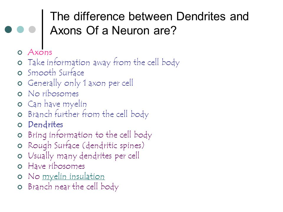The difference between Dendrites and Axons Of a Neuron are