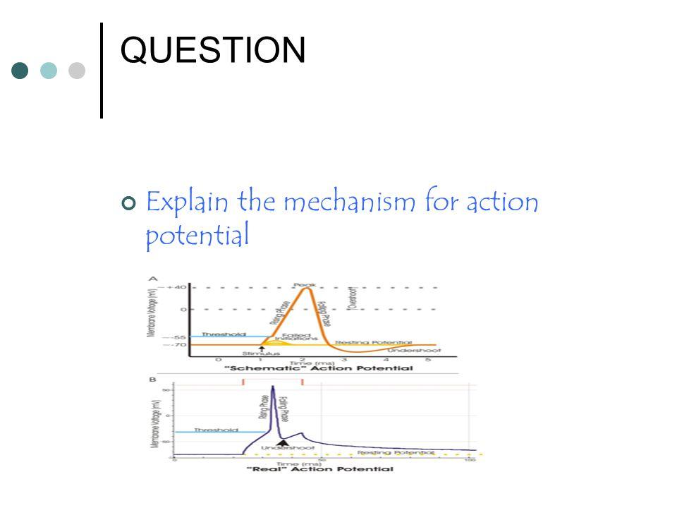 QUESTION Explain the mechanism for action potential