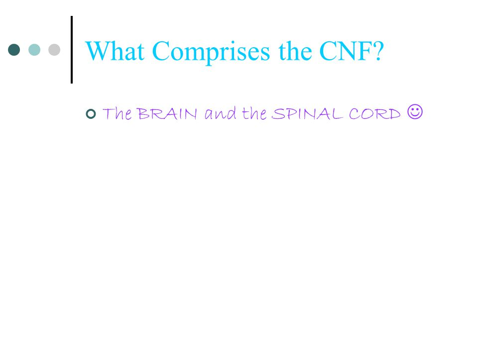 What Comprises the CNF The BRAIN and the SPINAL CORD 