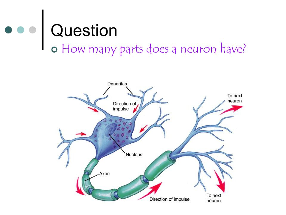 Question How many parts does a neuron have