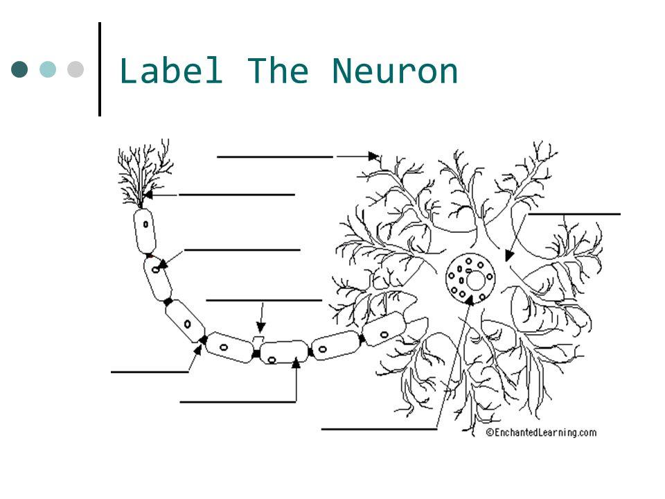 Label The Neuron