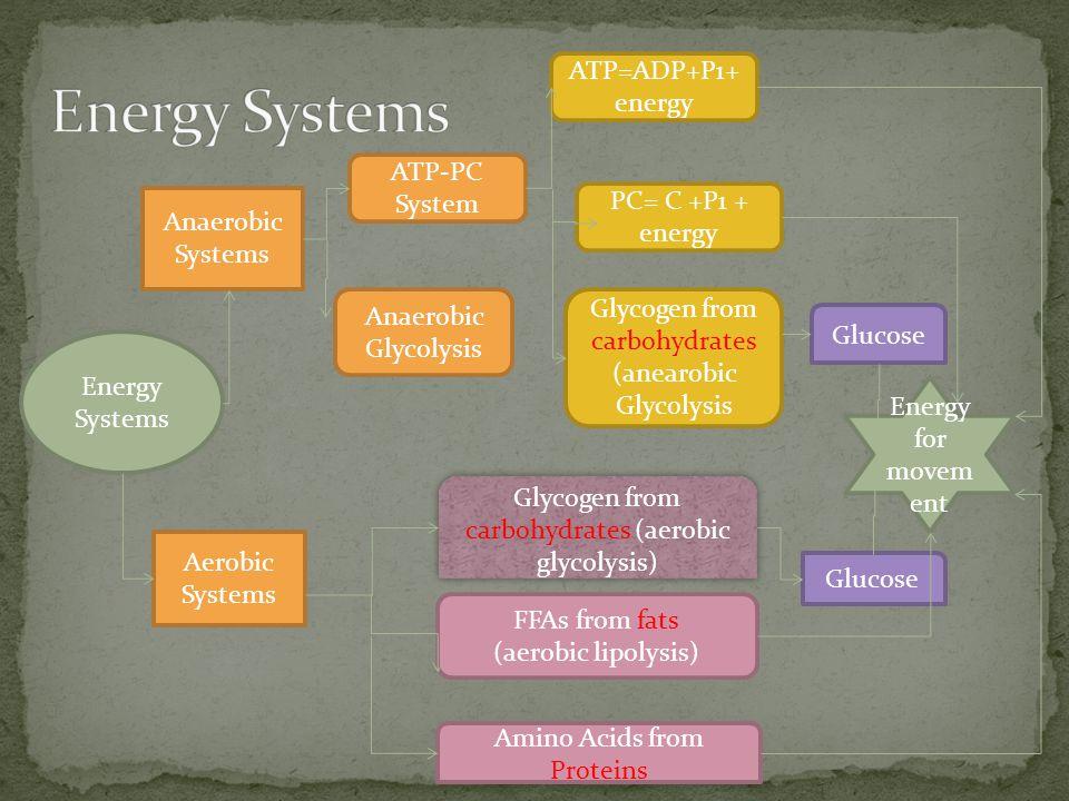 Energy Systems ATP=ADP+P1+ energy ATP-PC System PC= C +P1 + energy