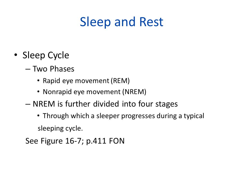 Sleep and Rest Sleep Cycle Two Phases
