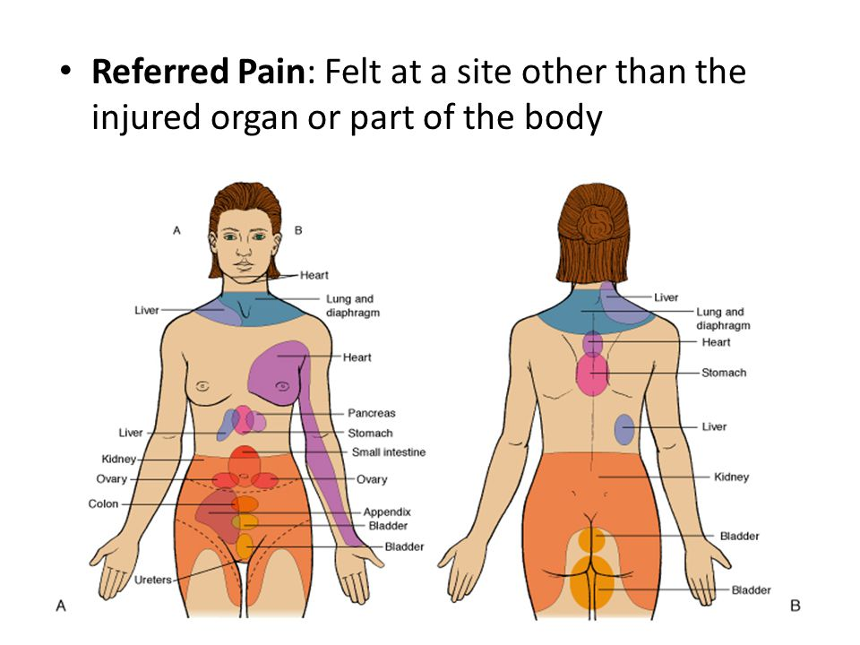 Referred Pain: Felt at a site other than the injured organ or part of the body