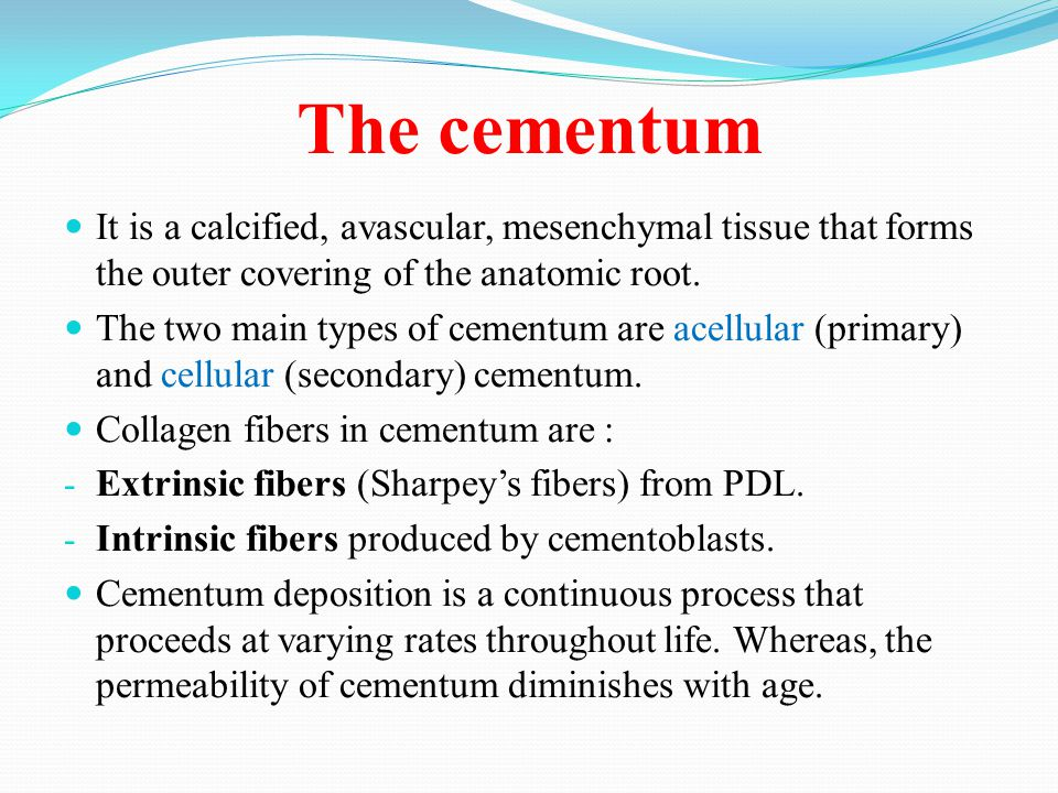 The cementum It is a calcified, avascular, mesenchymal tissue that forms the outer covering of the anatomic root.