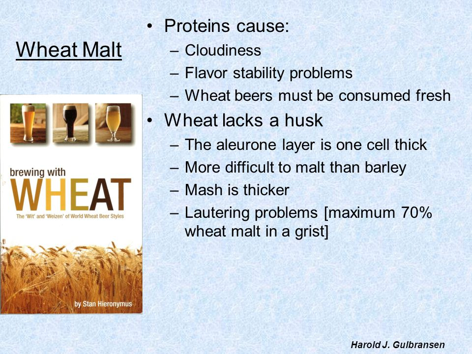 Wheat Malt Proteins cause: Wheat lacks a husk Cloudiness