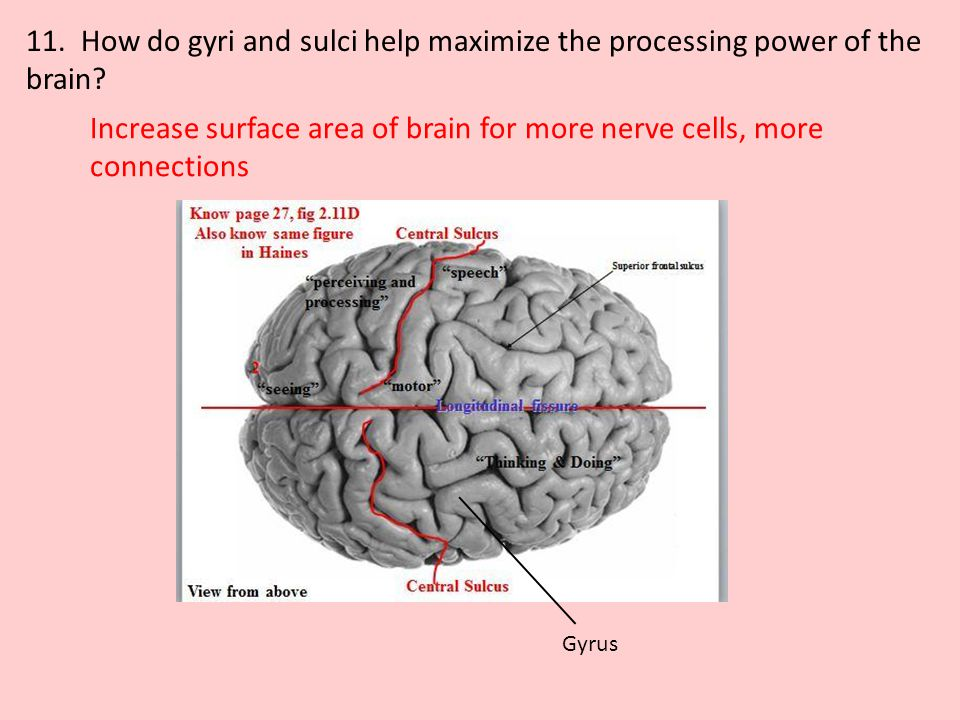 Increase surface area of brain for more nerve cells, more connections