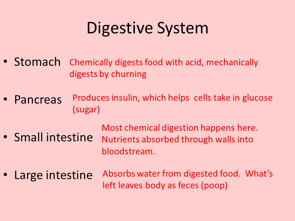 Digestive System Stomach Pancreas Small intestine Large intestine