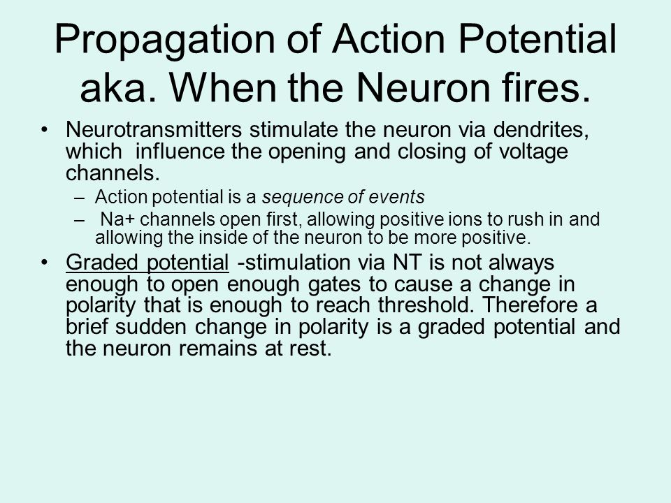 Propagation of Action Potential aka. When the Neuron fires.