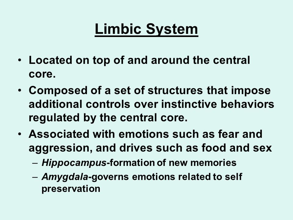 Limbic System Located on top of and around the central core.