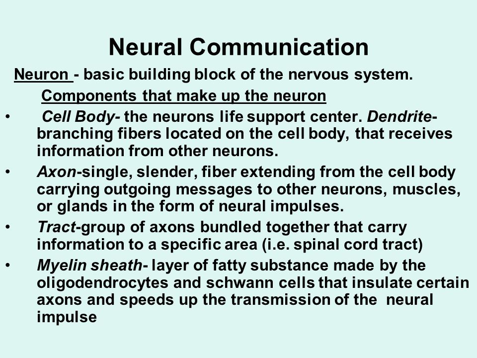 Neural Communication Neuron - basic building block of the nervous system. Components that make up the neuron.