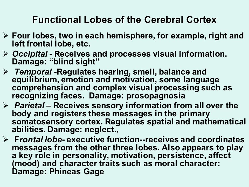 Functional Lobes of the Cerebral Cortex