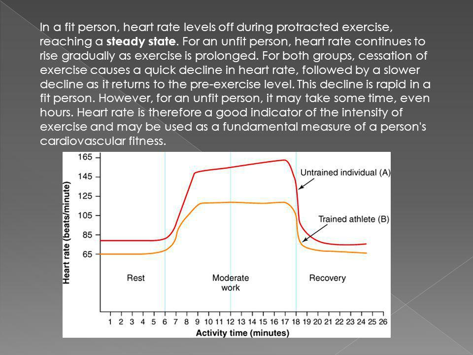In a fit person, heart rate levels off during protracted exercise, reaching a steady state.