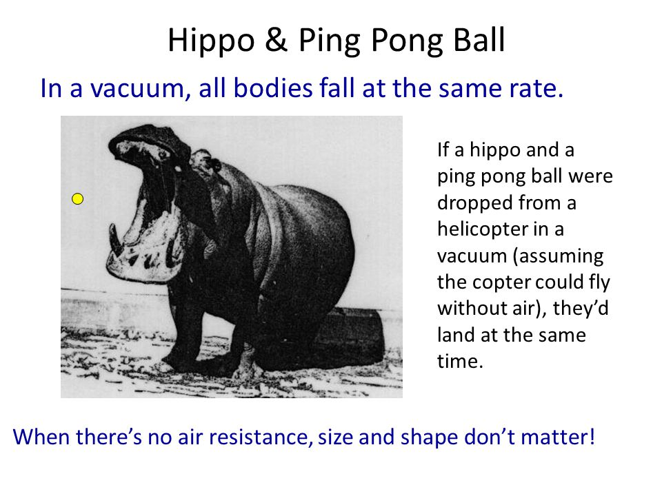 Hippo & Ping Pong Ball In a vacuum, all bodies fall at the same rate.