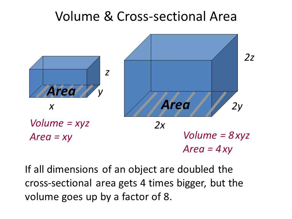 Volume & Cross-sectional Area