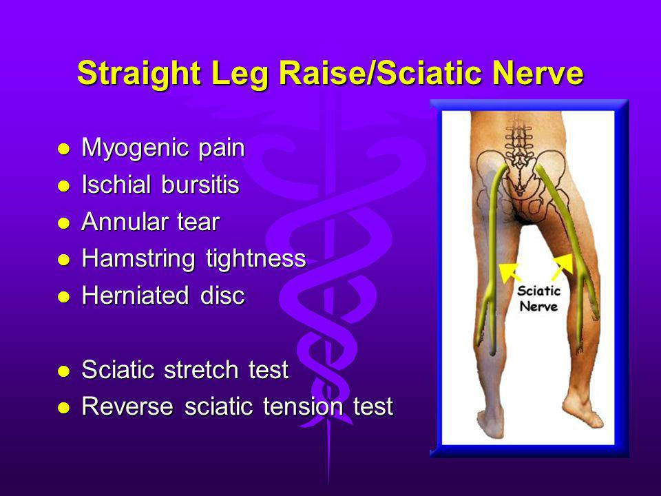 Straight Leg Raise/Sciatic Nerve