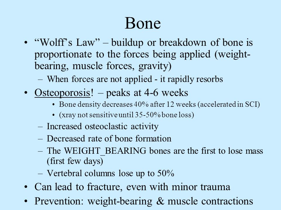 Bone Wolff's Law – buildup or breakdown of bone is proportionate to the forces being applied (weight-bearing, muscle forces, gravity)