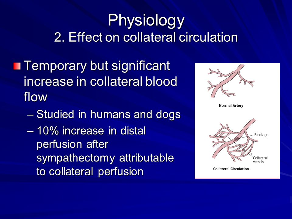 Physiology 2. Effect on collateral circulation