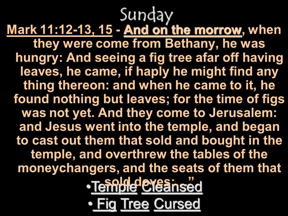 Sunday Temple Cleansed Fig Tree Cursed