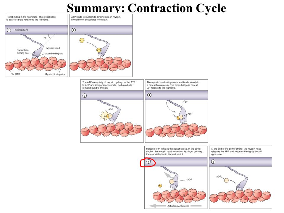 Summary: Contraction Cycle