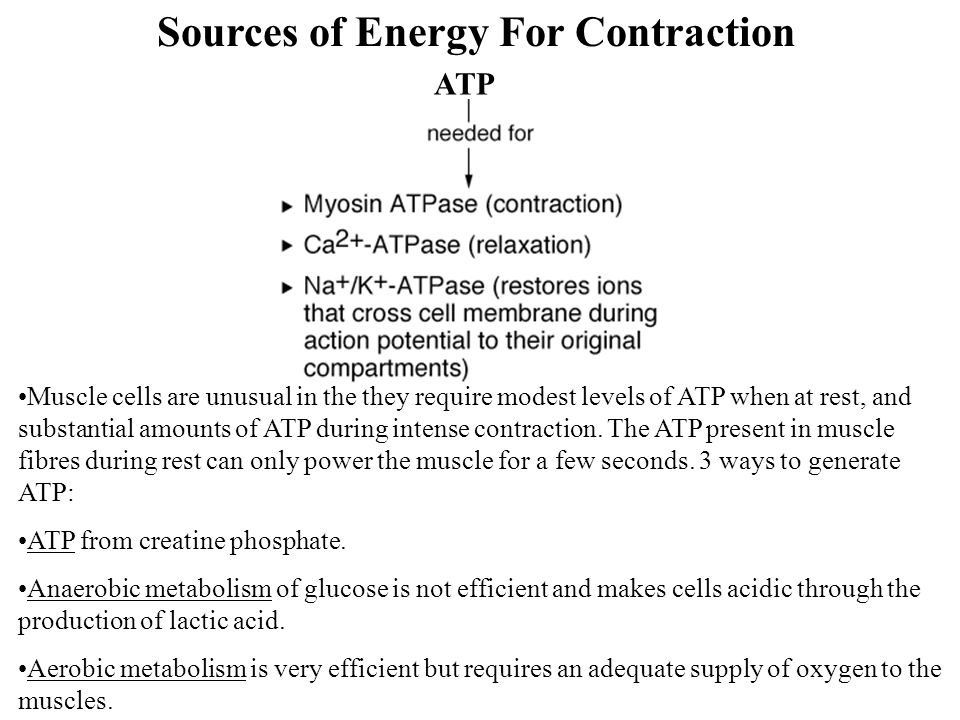 Sources of Energy For Contraction