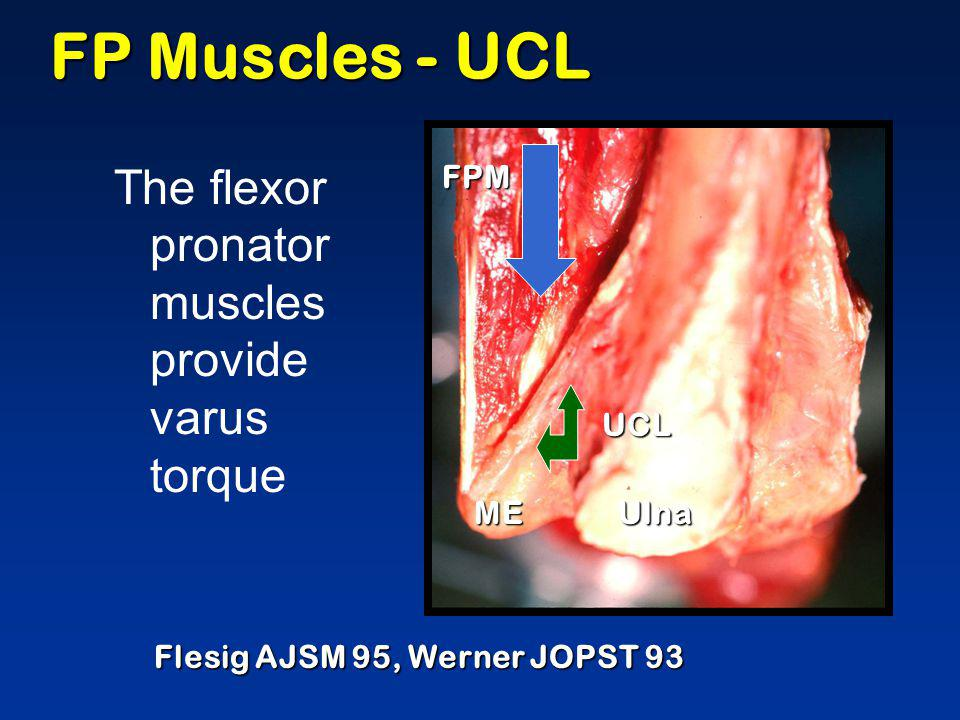 FP Muscles - UCL The flexor pronator muscles provide varus torque FPM