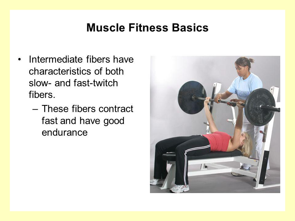 Muscle Fitness Basics Intermediate fibers have characteristics of both slow- and fast-twitch fibers.