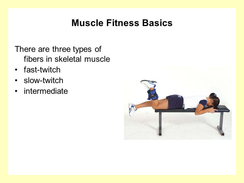 Muscle Fitness Basics There are three types of fibers in skeletal muscle. fast-twitch. slow-twitch.