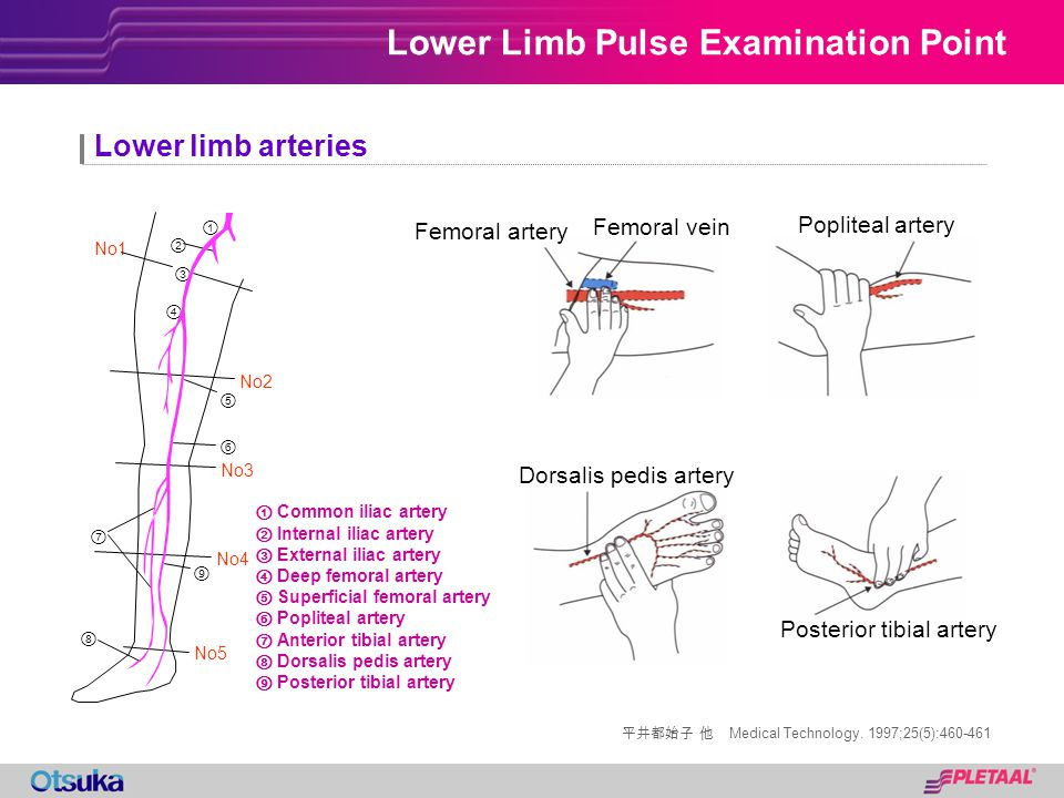 Lower Limb Pulse Examination Point